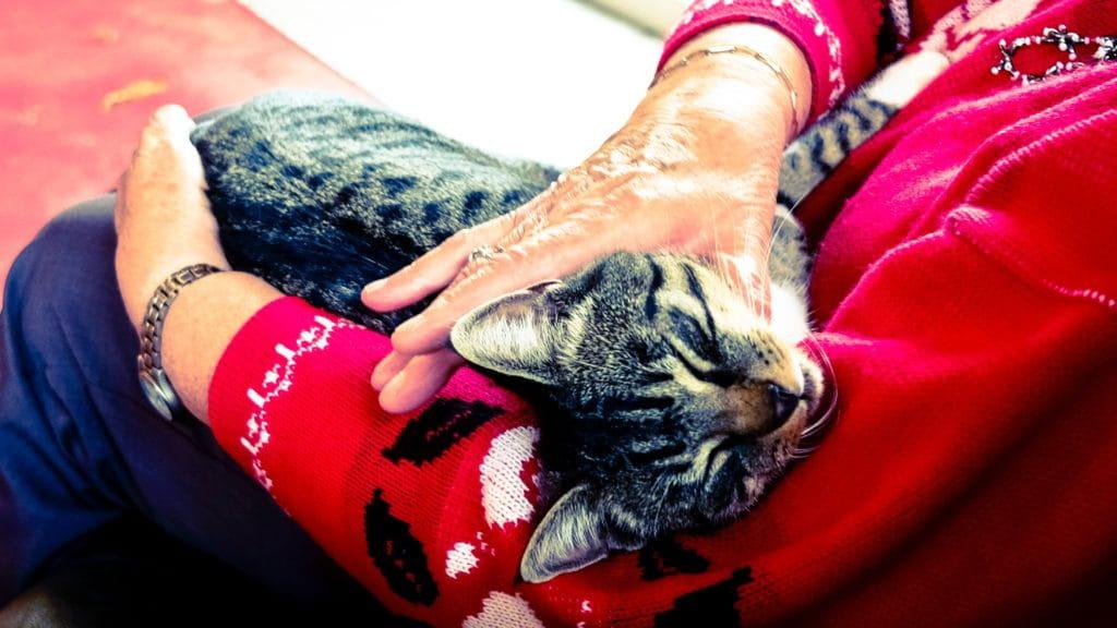 Un chat, animal de compagnie accepté dnas les maisons de retraite Senectis.