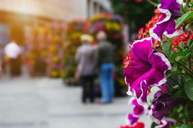 Photo de fleurs à l'occasion du Printemps des EHPAD avec Senectis.