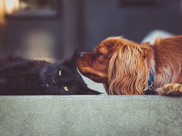 Chat et chien en EHPAD.