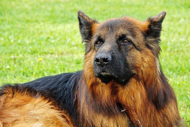 Un chien policier en maison de retraite.