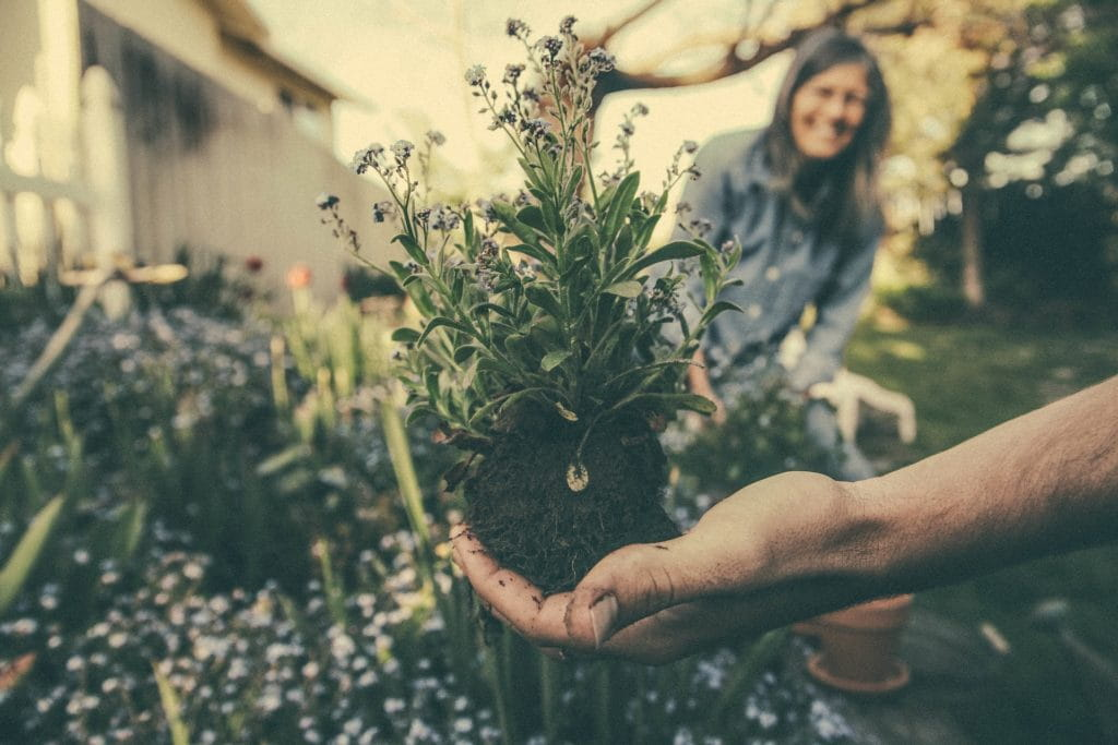 Photographie dans un jardin d'une main tendue avec à l'intérieur une plante, en second plan une femme sourit.