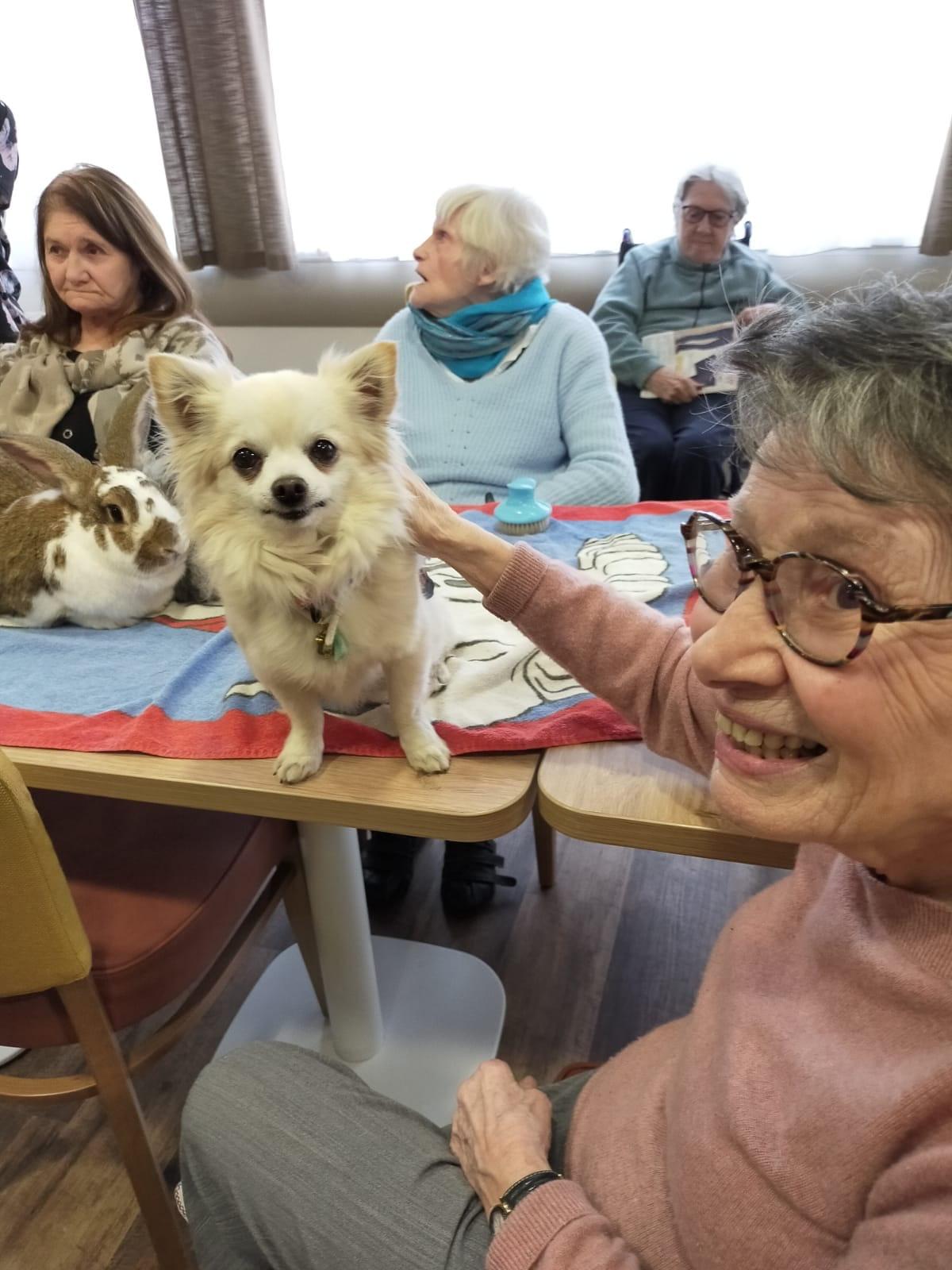 Chihuaha qui fait sourire une personne âgée