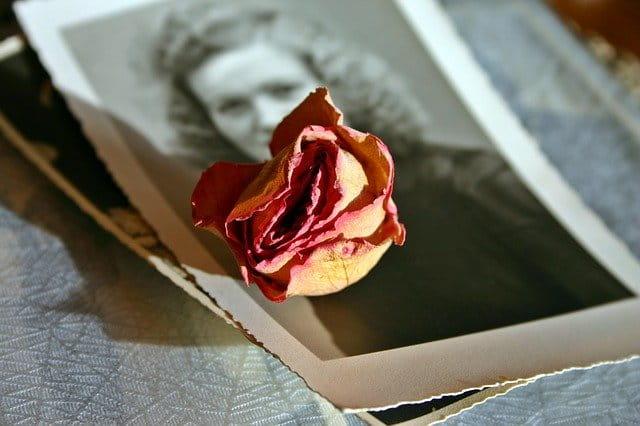 Photos anciennes sur lesquelles une fleur séchée est posée.