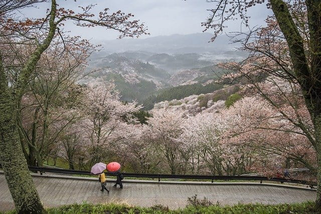 L'ikigai des personnes âgées.