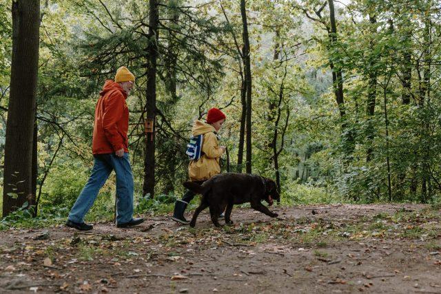 Groupe de marche en forêt pour seniors.